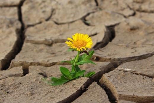 Themenblatt Klimaschutz